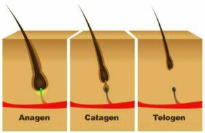 fazy-wzrostu-włosa